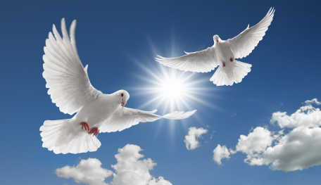 two flying doves